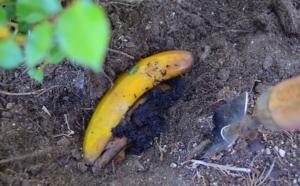 11 необычных способов использования банана